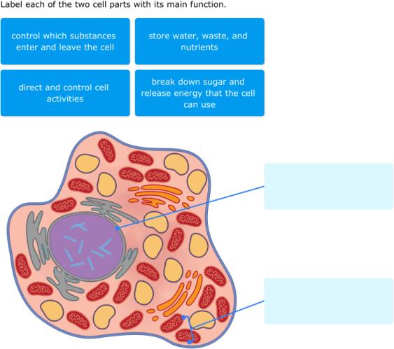 IXL   Animal cell diagrams: label parts   4th grade science