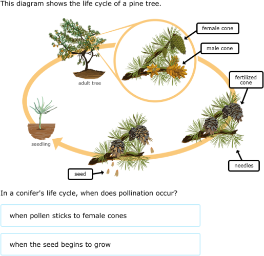 Ixl Flowering Plant And Conifer Life Cycles 5th Grade Science