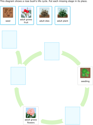 ixl | read and construct flowering plant life cycle diagrams | 3rd grade  science