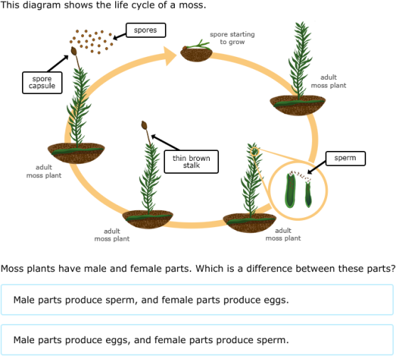 Ixl Moss And Fern Life Cycles 6th Grade Science