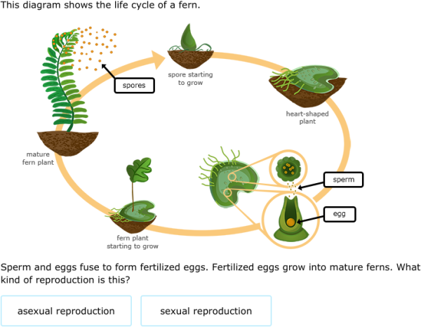 7th Life Cycle Of A Plant Diagram Diy Enthusiasts Wiring Diagrams