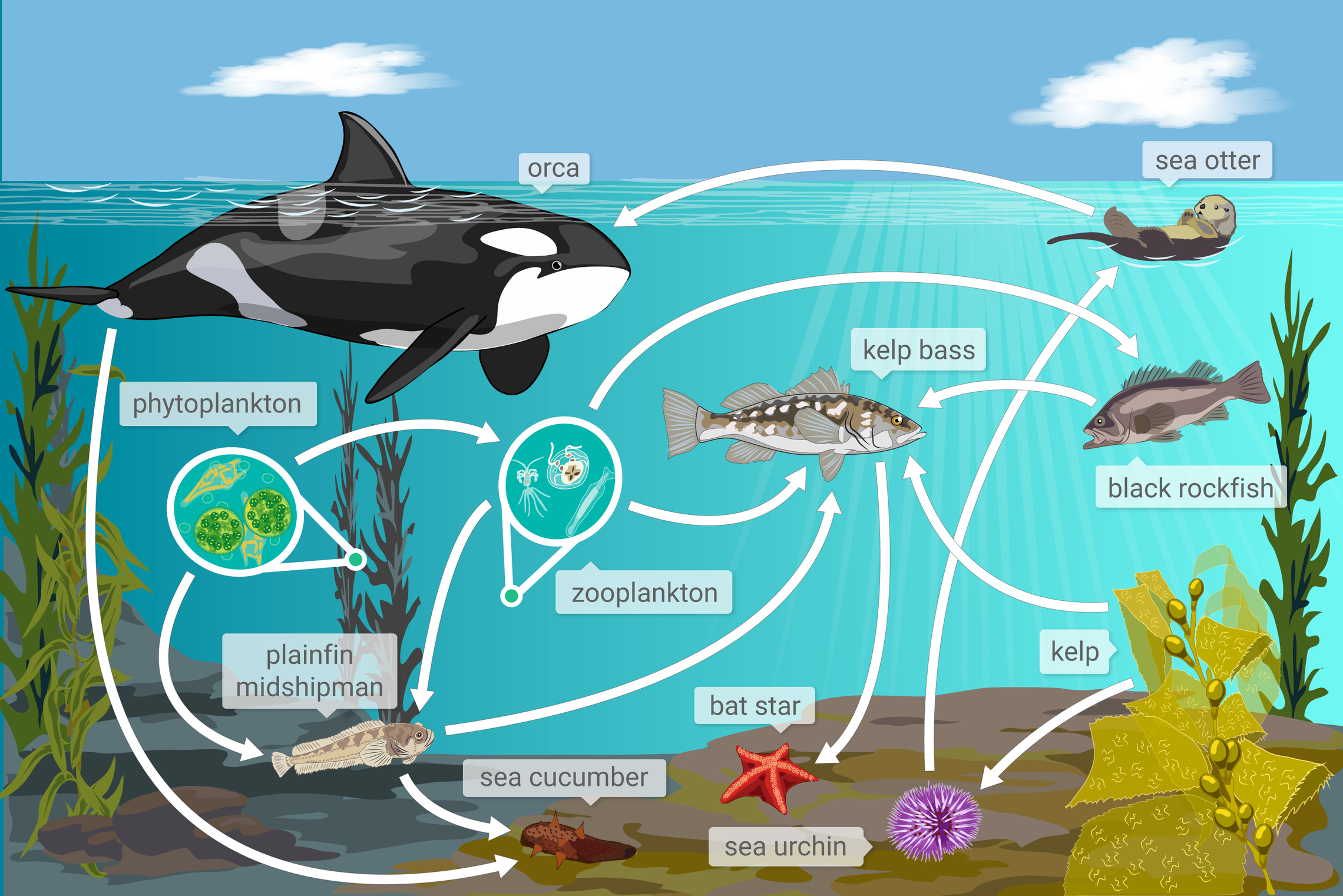 IXL | Interpret food webs I | 8th grade science